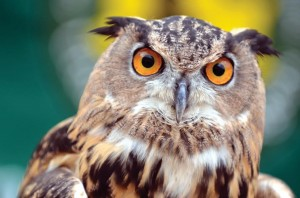 Orchard Beach's Hunter Island is home to many different species of nesting owls.<br /><i>Photo: Malcolm Pinckney</i>
