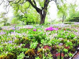 The Heather Garden.